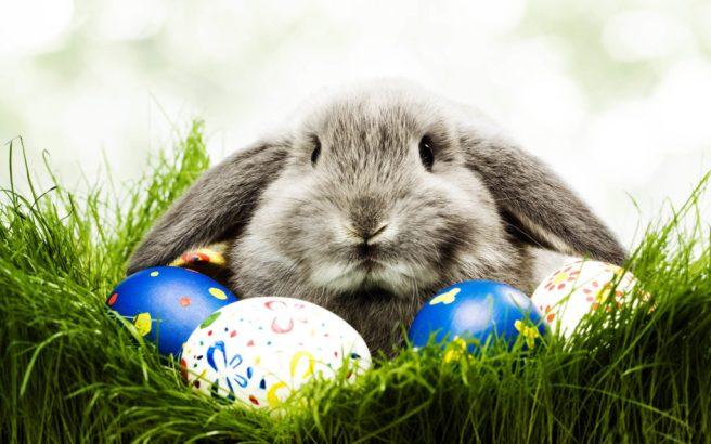 easter-bunny-1024x640.jpg